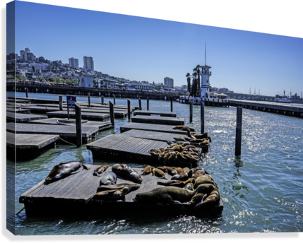 The Wharf @ San Francisco  Canvas Print
