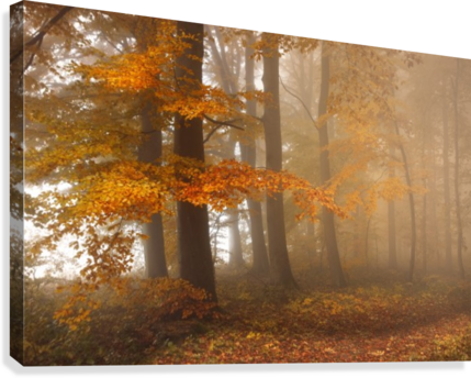 Edge of the woods  Canvas Print