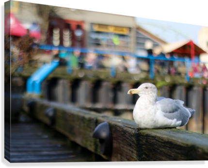 SEAGUL ALDO CRUZ  Canvas Print