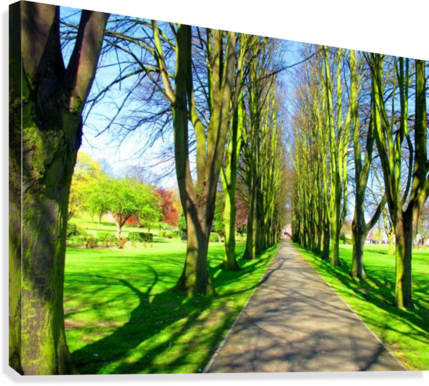 Summer Avenue  Canvas Print