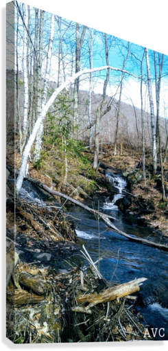 Brook through the Forest  Canvas Print
