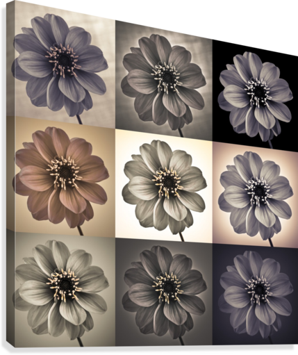 Collage of Dahlias flowers  Canvas Print