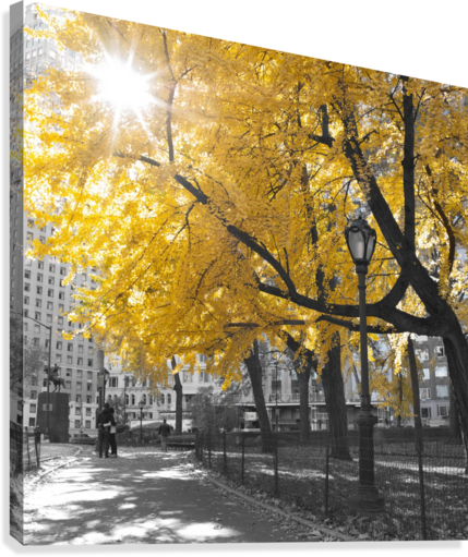 Pathway through Central park, New York City  Canvas Print