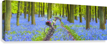 Bicycle in spring forest  Canvas Print