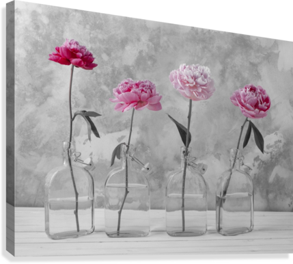 Peonies in glass bottles  Canvas Print