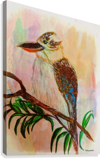 Kookaburra Bird   Canvas Print