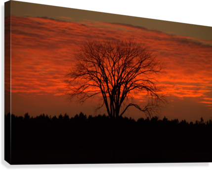 Wisconsin November Sunset Wood County  Canvas Print