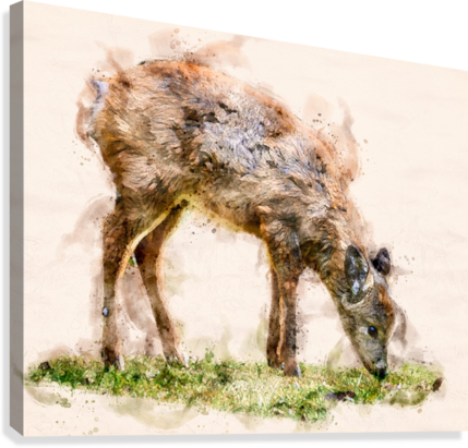 White Tail Deer  Canvas Print