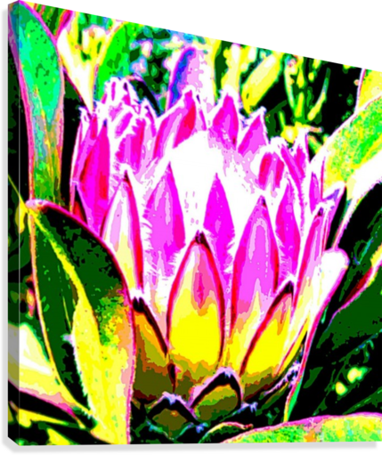PINK PROTEA BRATTY ART  Canvas Print