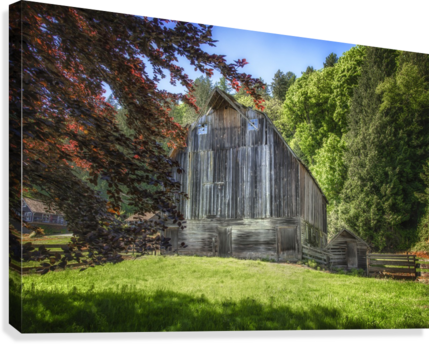 Old Cattle Barn  Canvas Print