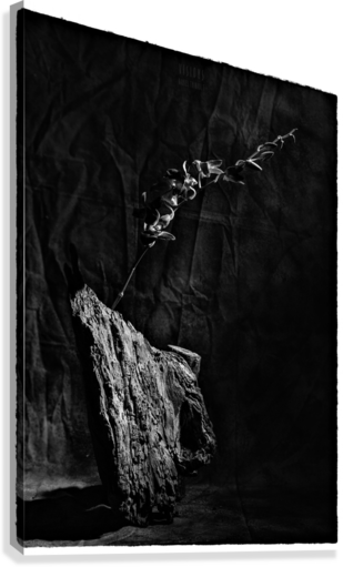 Black and white blues  Canvas Print