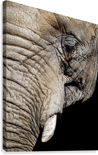 Elephant Close Up  Canvas Print