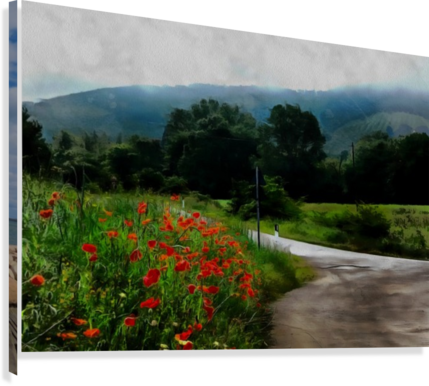 The Poppy Road to Happiness  Canvas Print