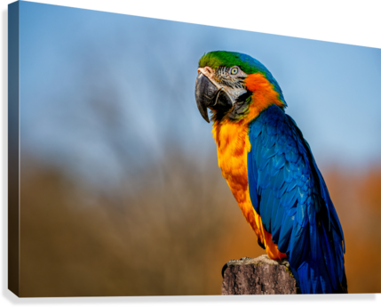 PARROT ERIC FRANKS PHOTOGRAPHY  Canvas Print