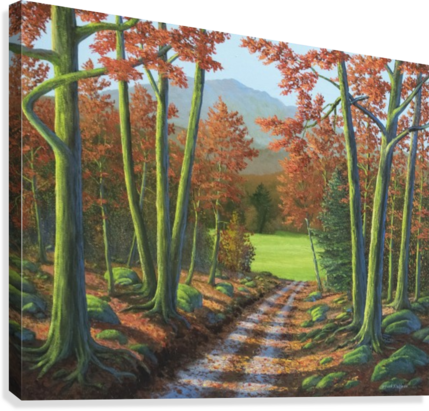 Maple Forest Road  Canvas Print
