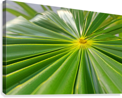 Beautiful Green  Canvas Print