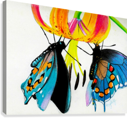 Butterflies and Lily  Canvas Print