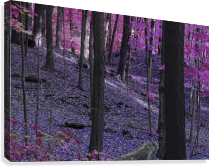 PURPLE FOREST IRRITATED EYE  Canvas Print