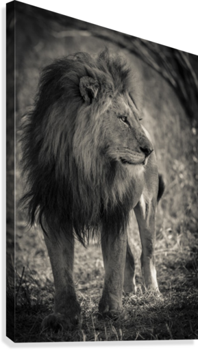 The King of South Africa - 3  Canvas Print