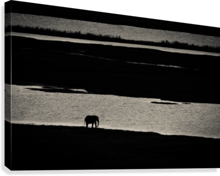 Chobe River Elephant  Canvas Print