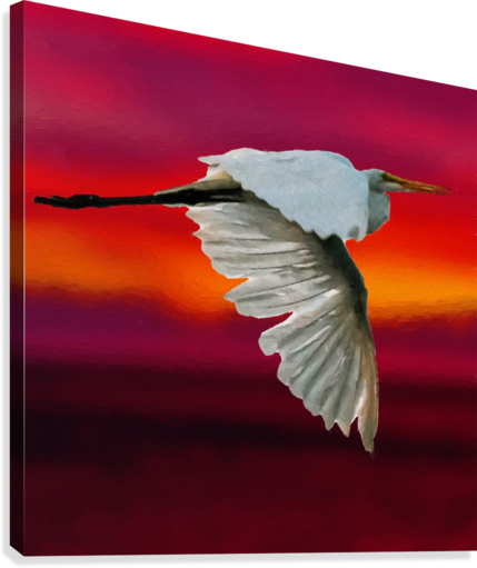 Egret in sunset  Canvas Print