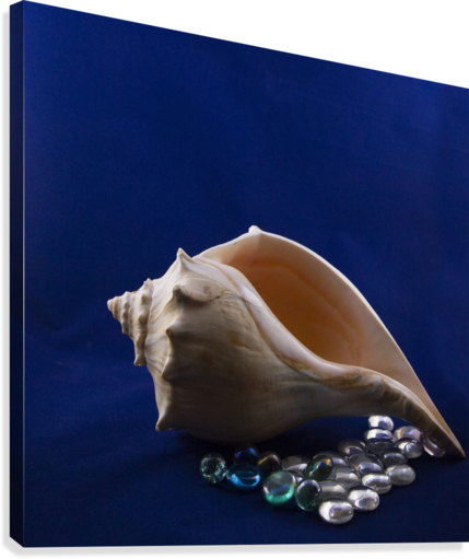 Single Conch Shell With Colored Glass   Canvas Print