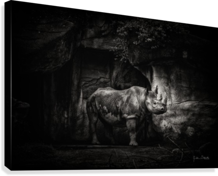 Rhino in Black & White  Canvas Print