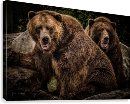Brown Bear Brothers Canvas print