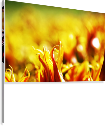 Flower Touch  Canvas Print