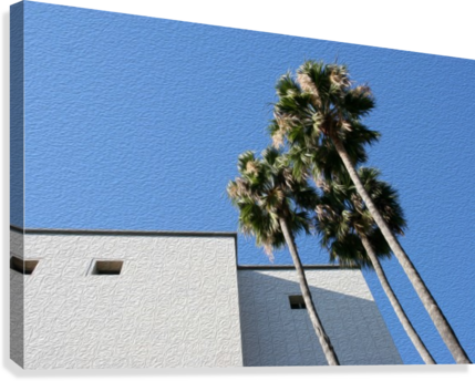 3 Palm Trees Next to Building  Canvas Print