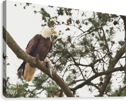 Eagles in Houston  Canvas Print