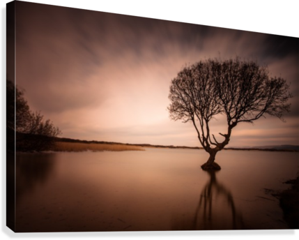 The Kenfig Tree  Canvas Print