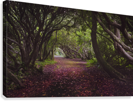 Rhododendron arched walkway  Canvas Print