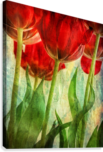 TULIPS LILY MARKOVIC  Canvas Print