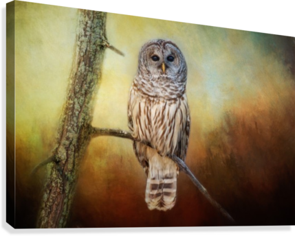 Barred Owl at sunrise with Textures  Canvas Print