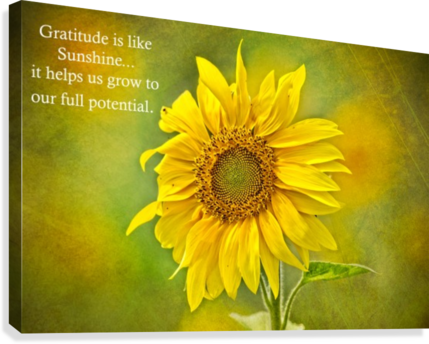 GRATITUDE IS LIKE SUNSHINE MICHEL SOUCY  Canvas Print
