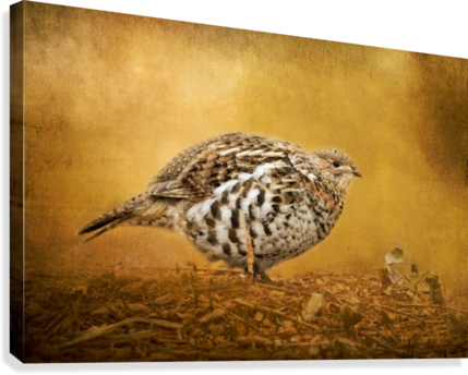 Female Ruffed Grouse  Canvas Print