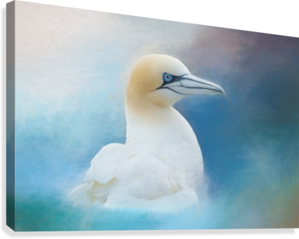 Northern Gannet ver2  Canvas Print
