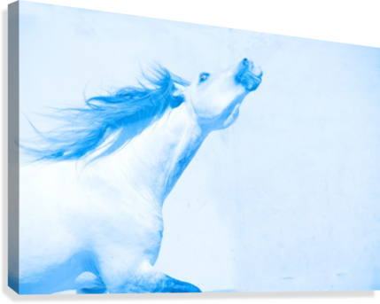 Blue Andalusian Horse 4  Canvas Print