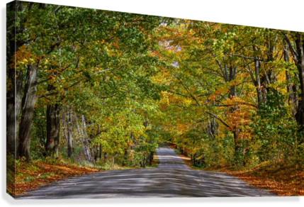 Fall Colors over a Country Road  Canvas Print