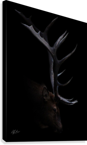 Elk in Black Canvas print