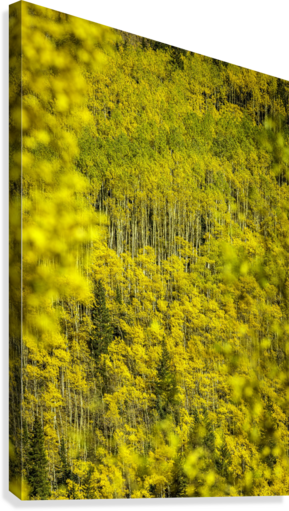 Full Stack of Yellows  Canvas Print