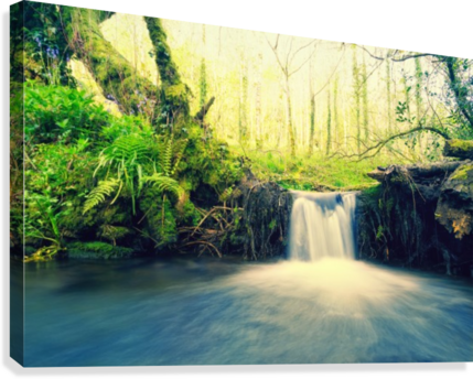 waterfall river nature forest   Canvas Print