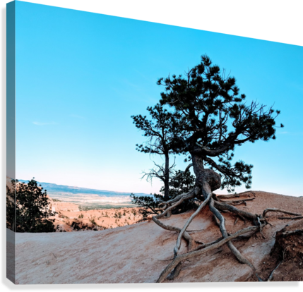 Bryce Canyon IV  Canvas Print