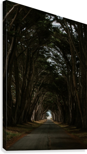Cypress Tree Tunnel California  Impression sur toile