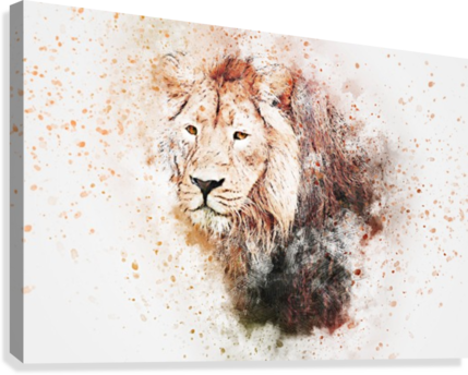 LIONSS STOCK PHOTOGRAPHY  Canvas Print
