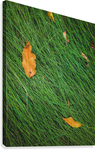 green grass field background with dry brown leaves  Canvas Print