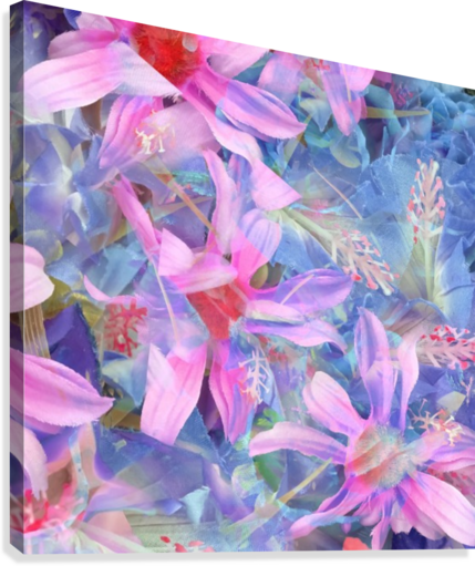 blooming pink and blue daisy flower abstract background  Canvas Print