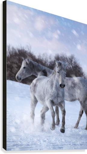 Horses in the Snow  Canvas Print