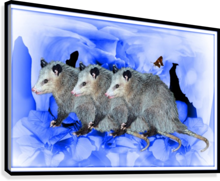 Party Of Possums  Canvas Print